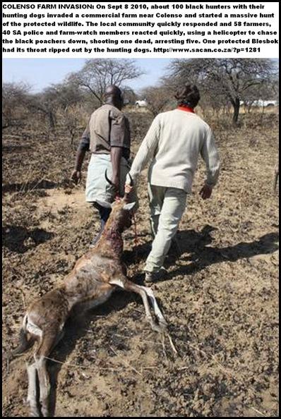 FARM INVADED COLENSO BY 100_PoachersInvadeColensoFarmWithDogsSept82010