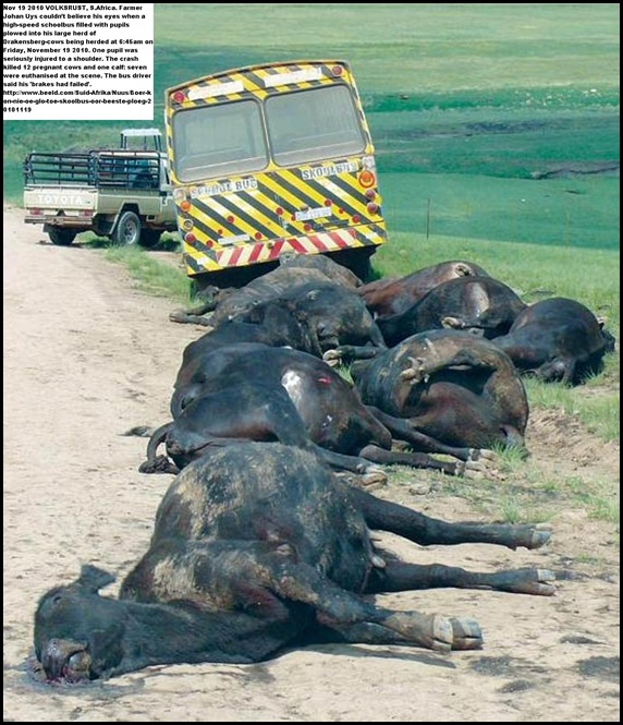 Pupil injured 13 cows dead in schoolbus accident Volksrust FriNov192010 BEELD