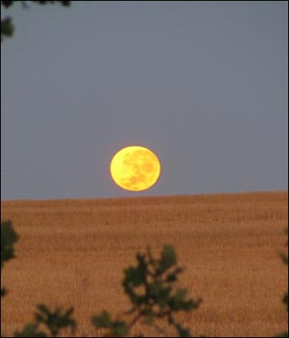 Farm wife Christa Steyn took this stunning picture of the full moon waning over their farm's glowing wheat-fields near Wellington at 06:08 Feb 272011, South Africa. Stellenbosch farmer Costa, shot dead several hours earlier, never was able to see this beautiful moon