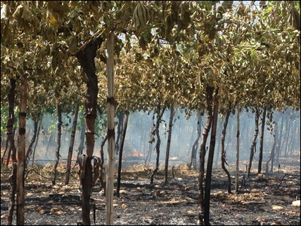 HEXRIVIER VINYARD JACQUES BEUKES PIC POLICE REFUSE TO INTERVENE NOV62012